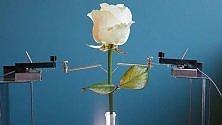 Elettronica organica È sbocciata la prima rosa bionica