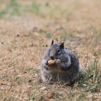 """Instagram, fenomeno #fatsquirrel: """"E' la stagione degli scoiattoli grassi"""""""