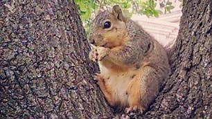 """Instagram, fenomeno #fatsquirrel """"Evviva gli scoiattoli grassi"""""""