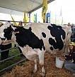 Intesa sul latte: Lactalis pagherà 3 centesimi in più