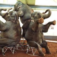 Hawaii, sì al progetto di legge che vieterà l'utilizzo di animali in strutture circensi