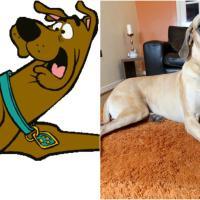 Presley, lo 'Scooby-Doo' fifone dal cuore tenero: il danese ha paura di tutto