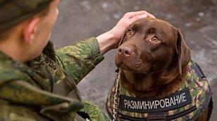 Realizzato giubbotto antiproiettile per cani