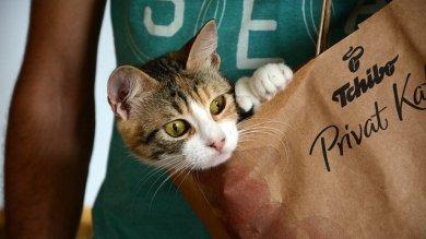 """Il vostro è un gatto """"gourmet? Vi spieghiamo perché è così schizzinoso"""