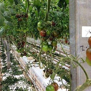 La sfida ai cambiamenti del Pianeta parte dalla terra: nell'orto del futuro si coltiverà senza suolo