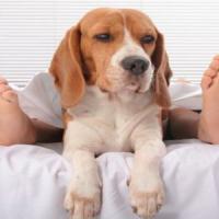 Dormire con gli animali a 4 zampe? Ecco la pet therapy del sonno
