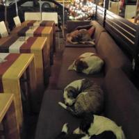 Grecia, il bar che accoglie i cani randagi dopo l'orario di chiusura