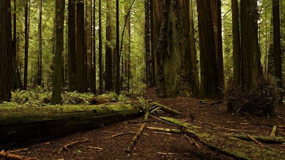 La siccità minaccia decine di milioni di alberi in California