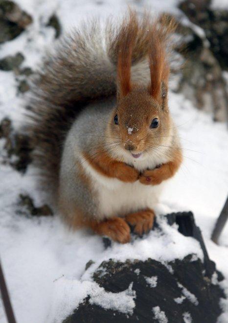 Che freddo: in Russia meno venti gradi