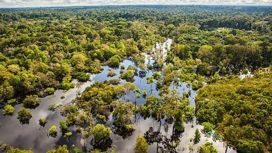 Risultati immagini per rio delle amazzoni