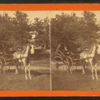 Il paradiso dei bibliofili è nato: la New York Public Library rende disponibili 180mila immagini