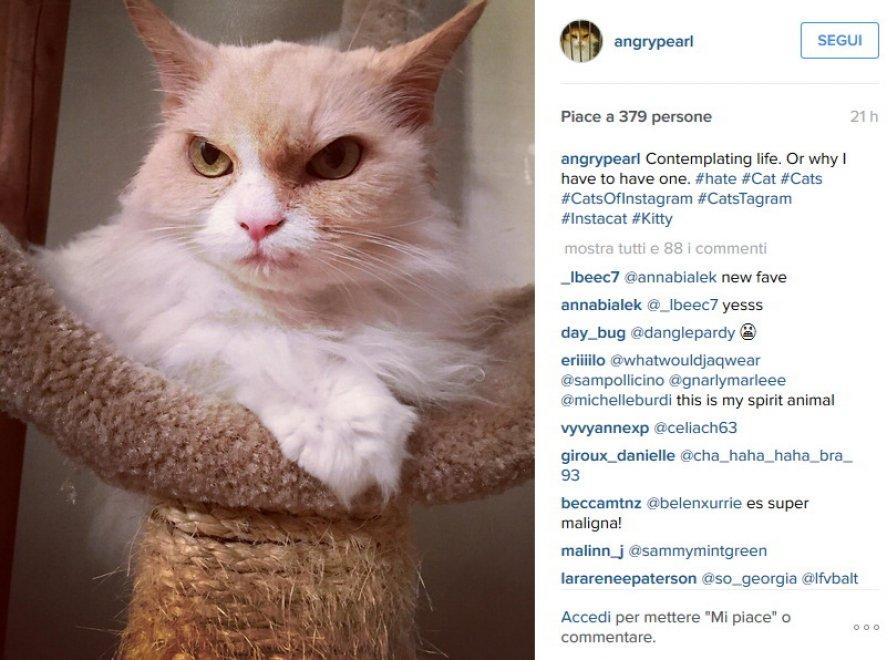 Usa, la nuova star del web è una gatta: il suo sguardo è minaccioso