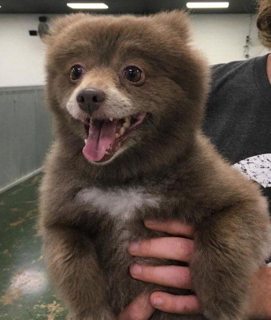 È un cane o un orso? Il mistero corre sul web
