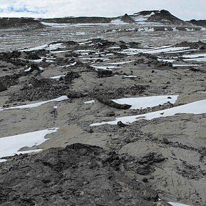 Dove ora c'è l'Antartide, un tempo erano solo grandi foreste