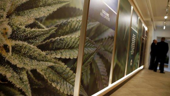 Cannabis, Ncd stoppa la depenalizzazione
