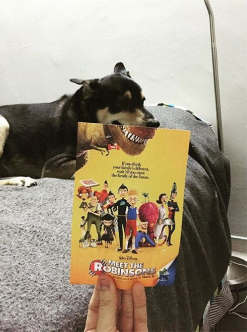 Animali da locandina, i mash-up trasformano i cuccioli in star del cinema