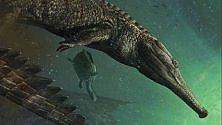 È il Machimosaurus Rex il più grande coccodrillo marino mai esistito