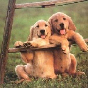 Anche fido prova empatia: dimostrato il contagio emotivo dei cani