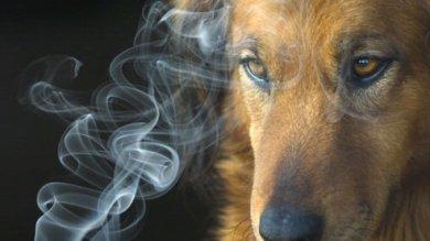 Non sai proprio smettere di fumare? Così fai male anche a Fido e Micio