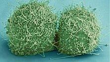 Nel nostro corpo tanti batteri quante cellule