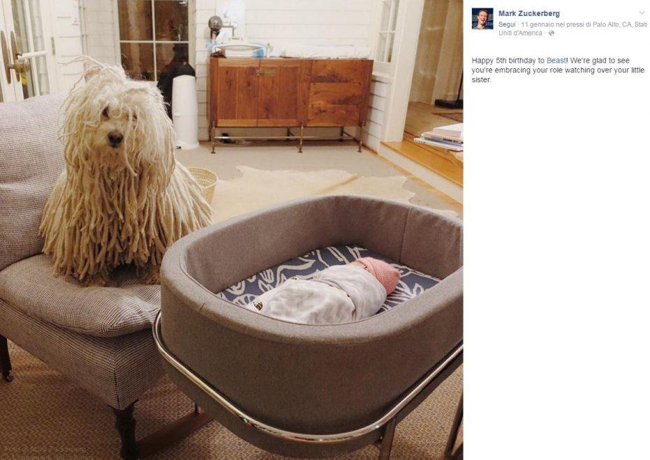 Beast, compie 5 anni il cane social di Zuckerberg: foto di auguri su Fb con Max