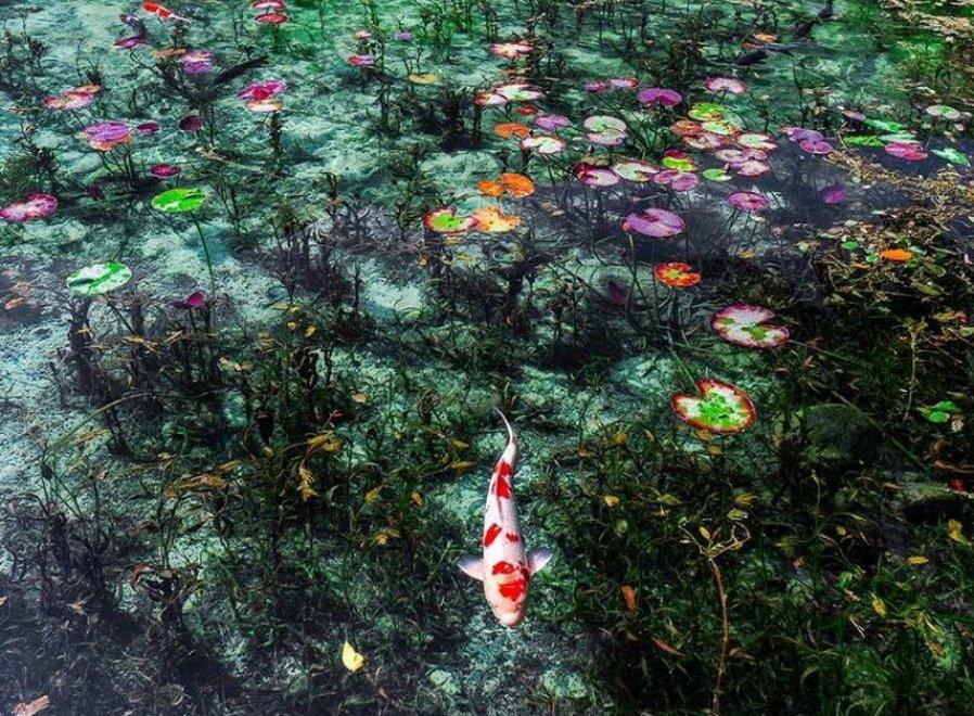 Giappone, ecco lo stagno più bello del mondo: sembra un quadro di Monet