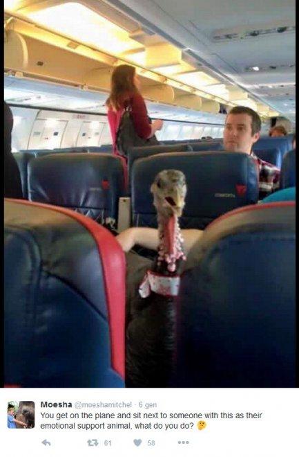 Stati Uniti: l'insolito viaggio in aereo in compagnia di un tacchino