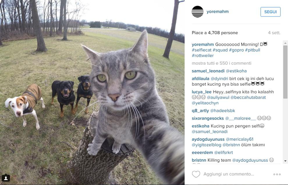 """Manny, il """"boss dei cani"""": i selfie del gatto con i compagni di gioco"""