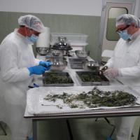 "Luca Pani: ""Ma la sperimentazione è l'unica via per avere medicinali innovativi"""