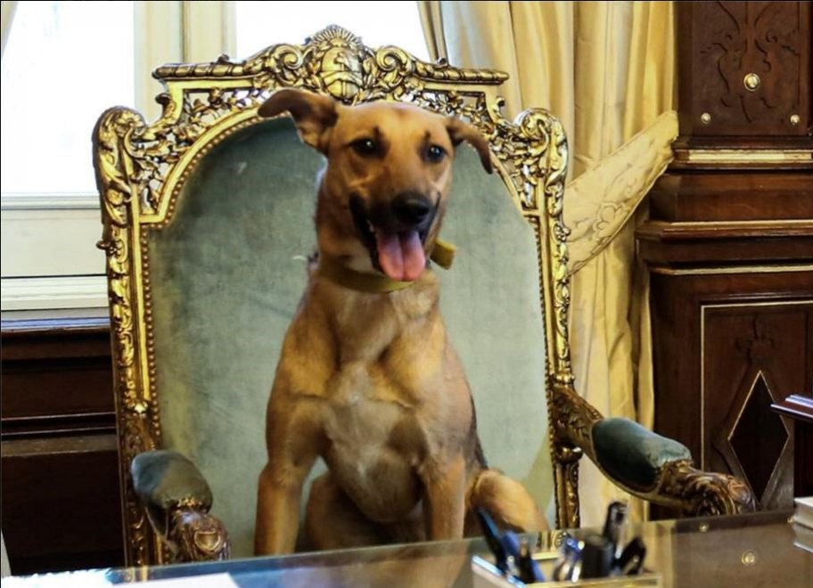 Argentina, il cane Balca sulla sedia presidenziale: Macri mette foto su Fb