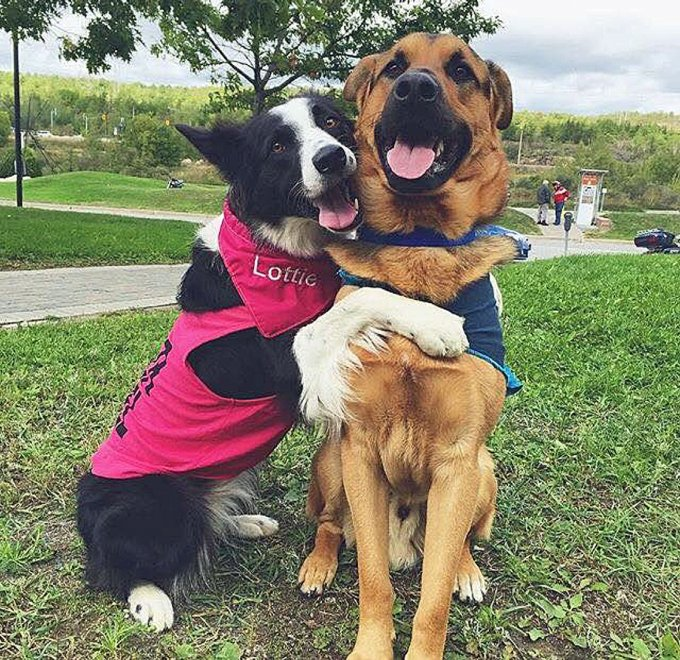 Canada, l'amicizia in un abbraccio: i due cani sono inseparabili