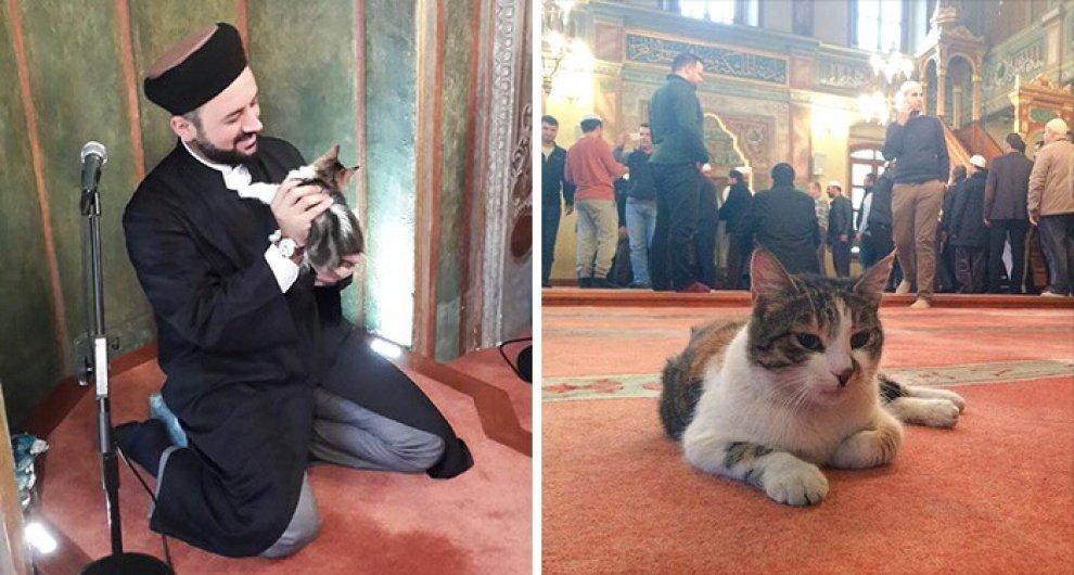 Istanbul: la moschea apre le porte ai gatti randagi