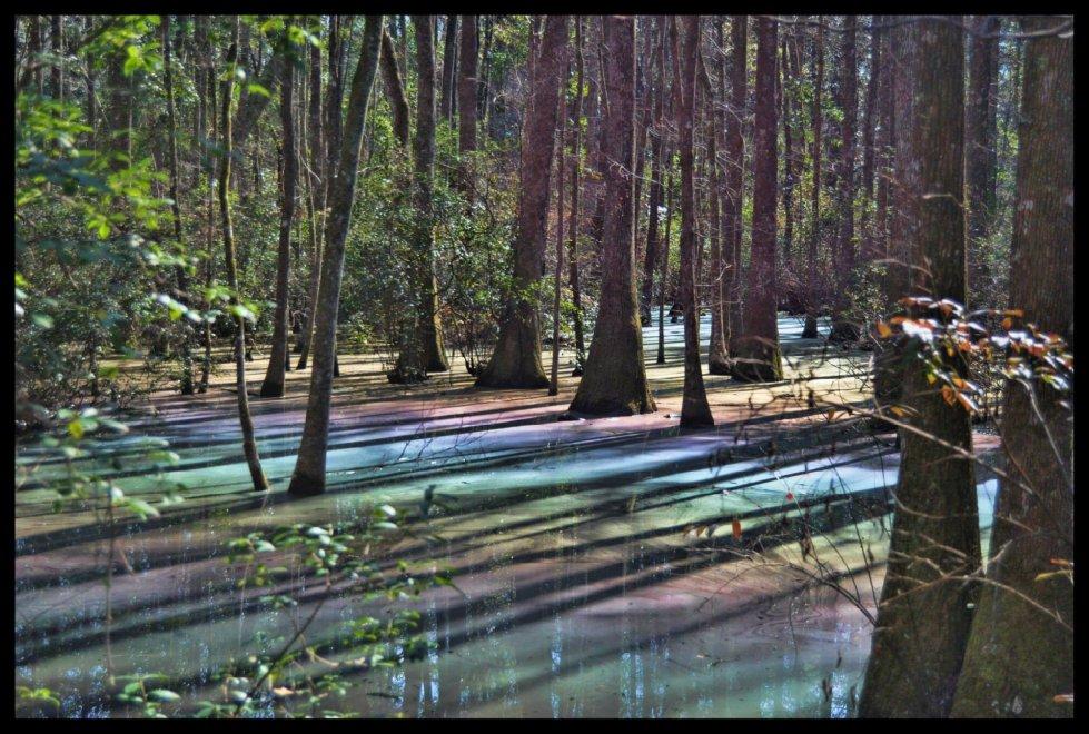 Florida, acque arcobaleno: la palude è psichedelica