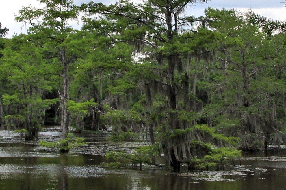 Le radici del lago: lo spettacolo delle foreste sommerse