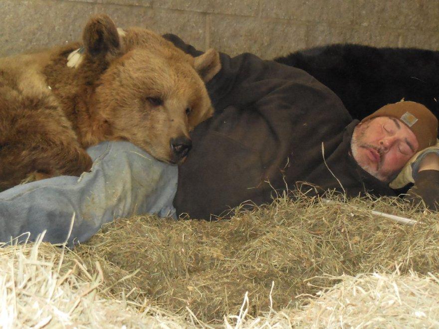 New York, relazioni speciali: l'uomo che dorme in mezzo agli orsi