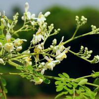 Medicina e piante: quando le proprietà curative sono naturali