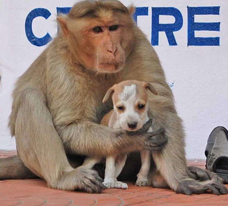 India, un pasto per due: il macaco adotta il cagnolino