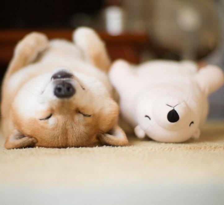 Quando i sogni sono di pezza: il cane dorme come il peluche