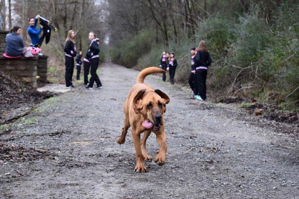 Usa, il cane esce e partecipa per sbaglio alla maratona: arriva settimo