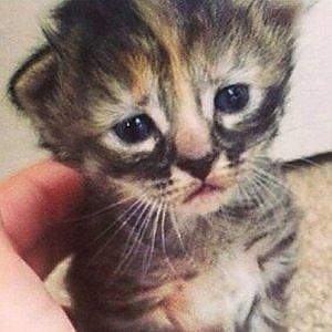 """GB, gattini venduti come """"esche"""" per i cani da combattimento"""