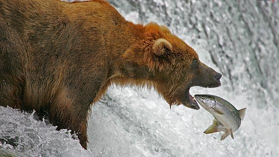 Prezzi alle stelle, ora il salmone costa più di un barile di petrolio