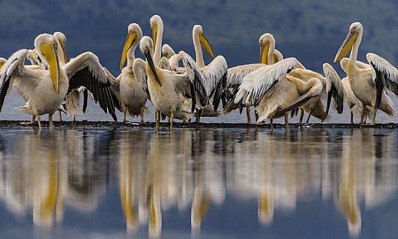 Lake Nakuru. L'oasi del safari perfetto