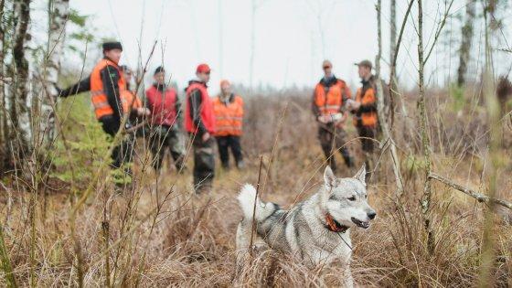Chiude la stagione della caccia, il bilancio del Wwf