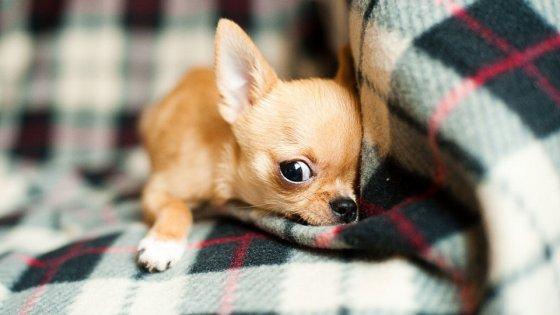 Chihuahua, allarme per il boom rapimenti