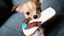 Chihuahua, è allarme per il boom rapimenti