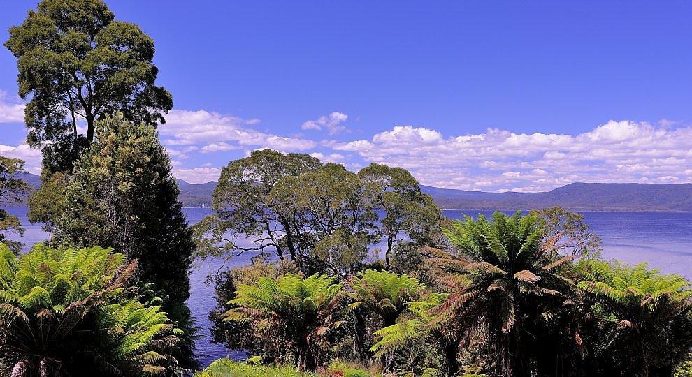 Tasmania, eden a rischio -   foto