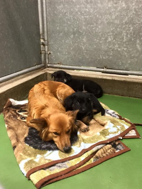 Canada, cagnetta scappa dalla gabbia per consolare cuccioli spaventati