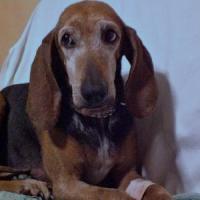 Malasanità veterinaria, anche gli animali devono avere giuste cure