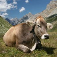 Coldiretti: scomparsi 2 milioni di animali da allevamento