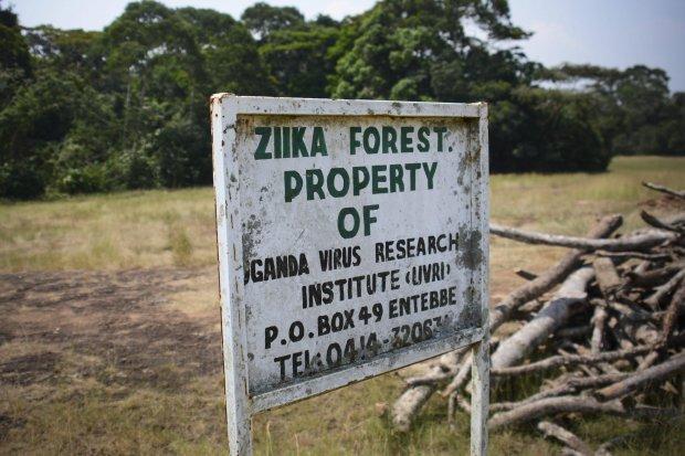 Zika, Uganda: la foresta dove è nato il virus, nel 1947